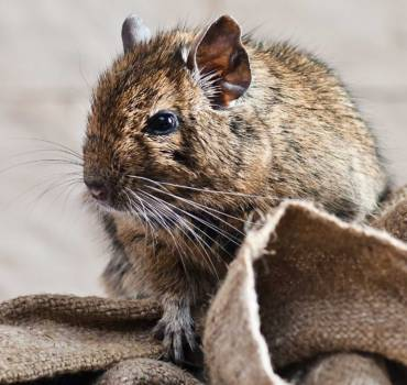 MICE & RATS Services